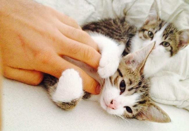 Katzenbabies spielen mit einer Hand