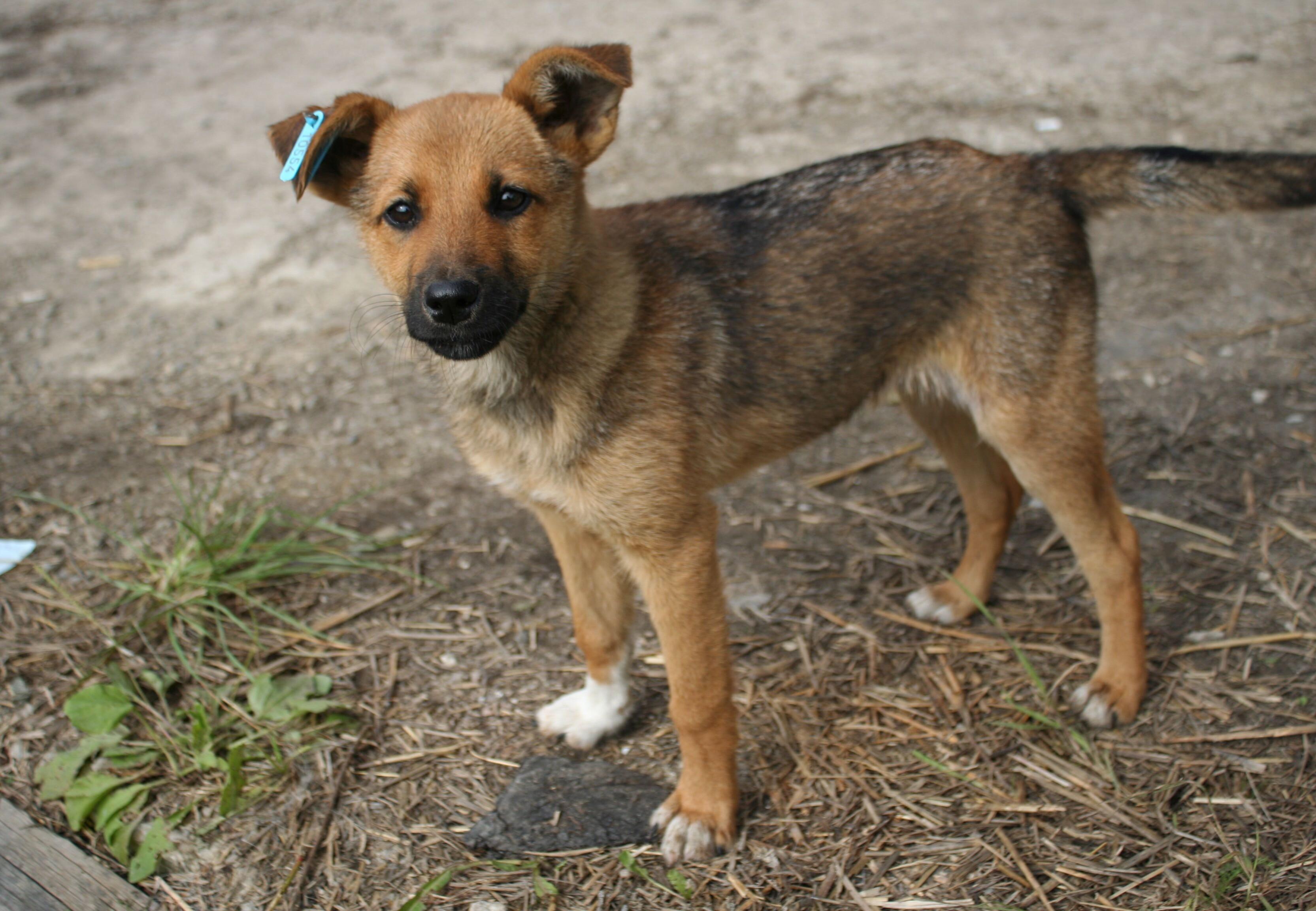 Aide aux animaux errants en Ukraine