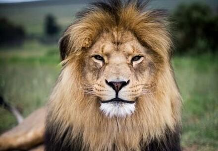 Lion Mario