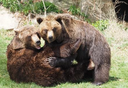 BEAR SANCTUARY Arbesbach