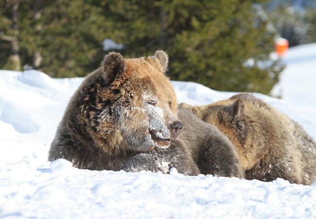 Меймо и Амелия в снега
