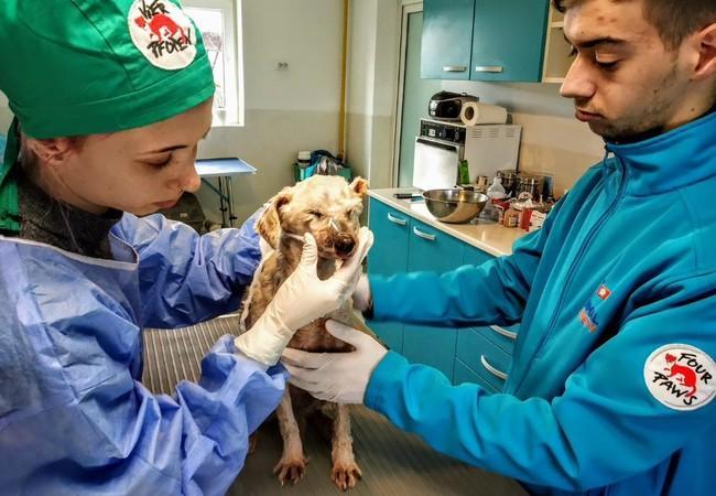 Hündin Oiţã wird in der Klinik behandelt