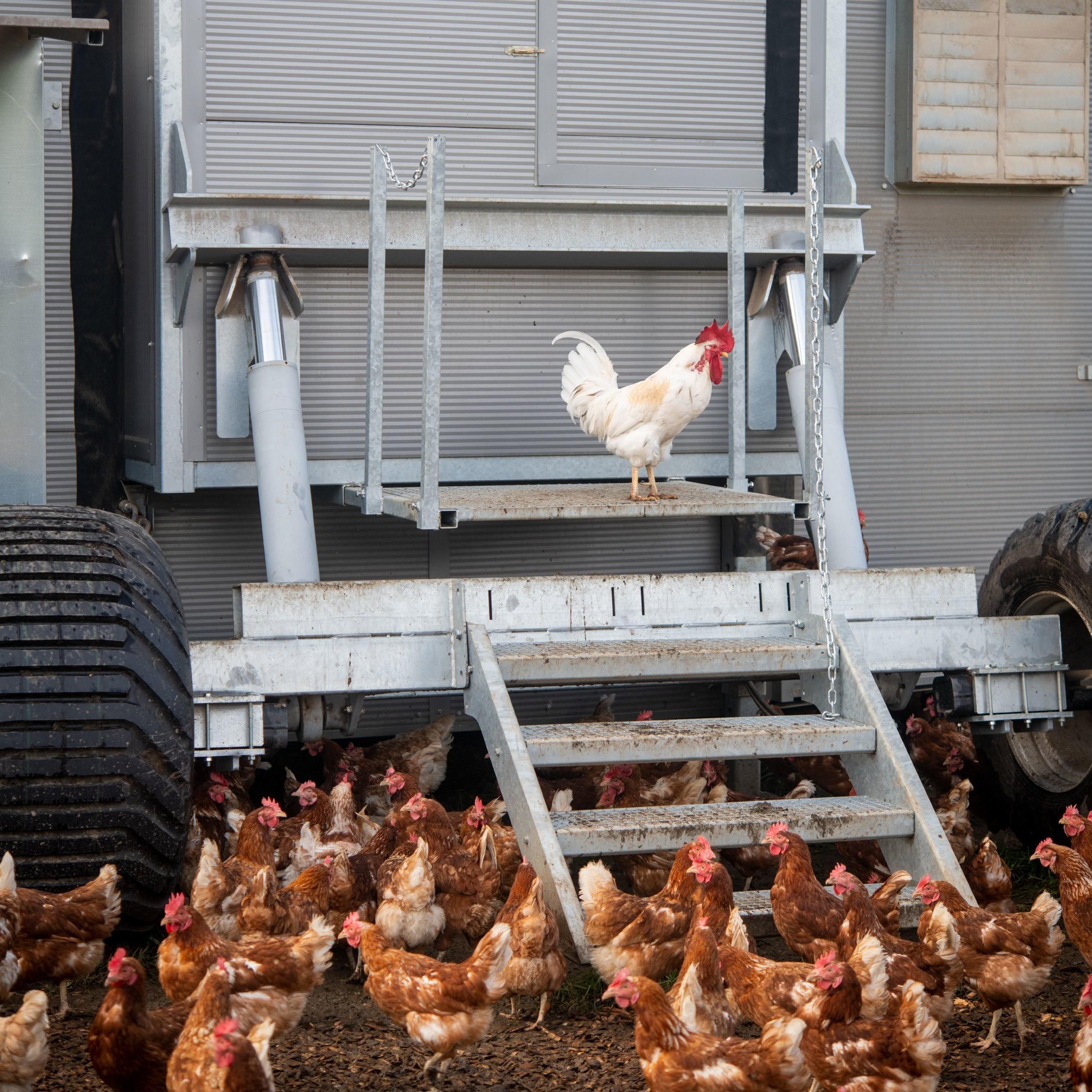 Mobiler Hühnerstall