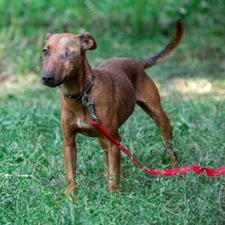 куче Сира (Dog Sira)