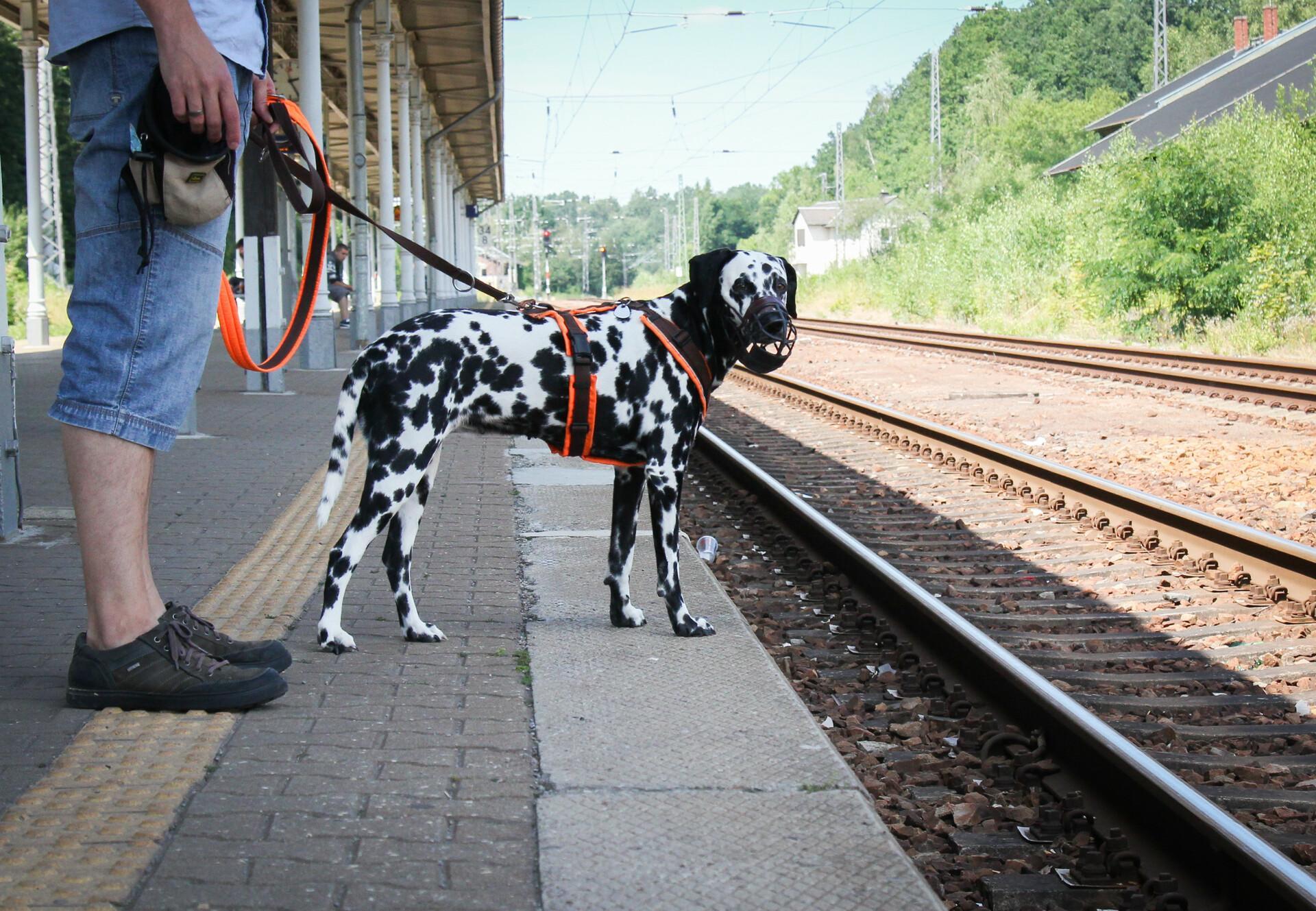 Hund am Bahnhof