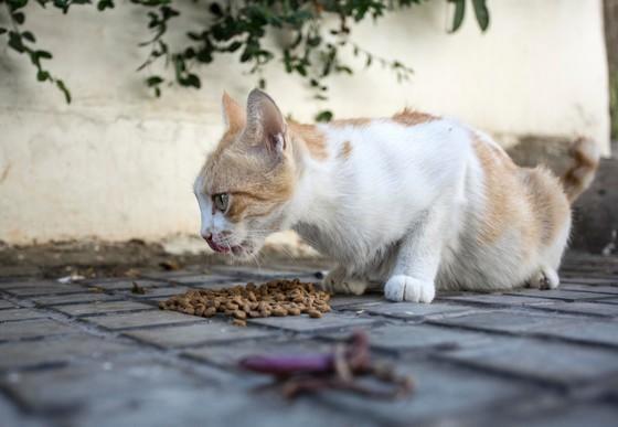 Hilfe für Tiere in Beirut