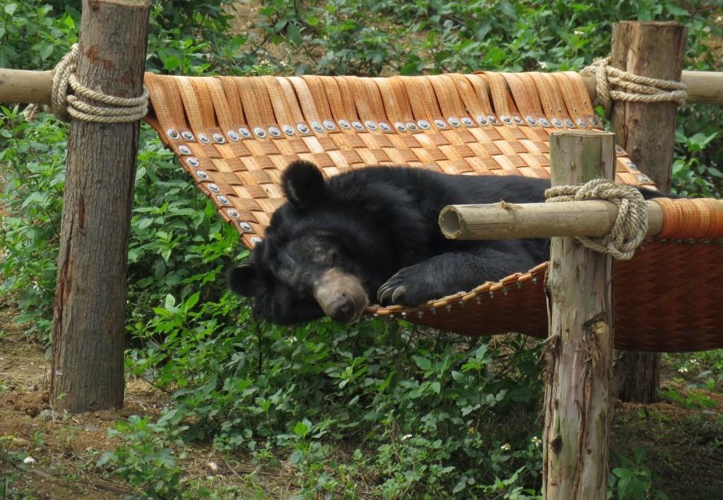 Bear at BEAR SANCTUARY Ninh Binh
