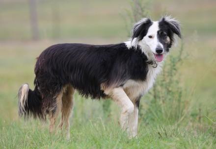 Hund (c) VIER PFOTEN