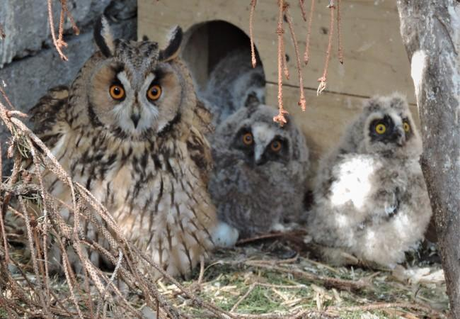 So sieht die Ammenmutter mit ihren Tierkindern aus.