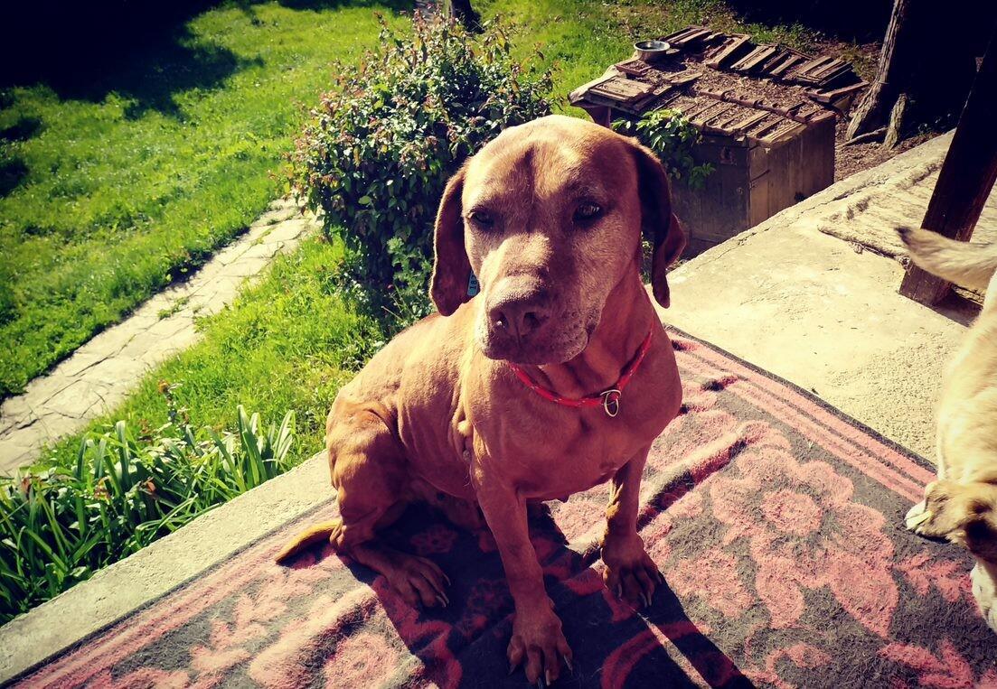 куче Торин