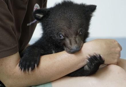 Rescued bear cub Mochi