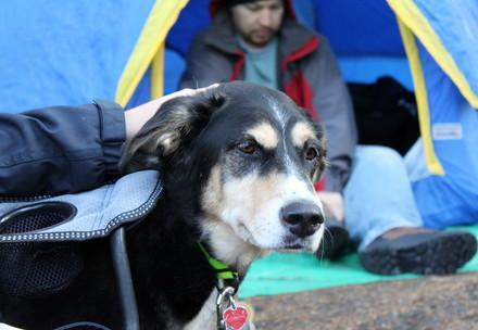 Hund vor dem Zelt