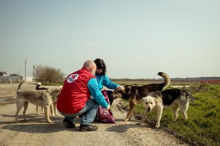 Aide aux animaux errants en Roumanie pendant le Coronavirus