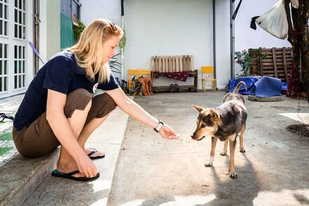 VIER VOETERS medewerker met hond