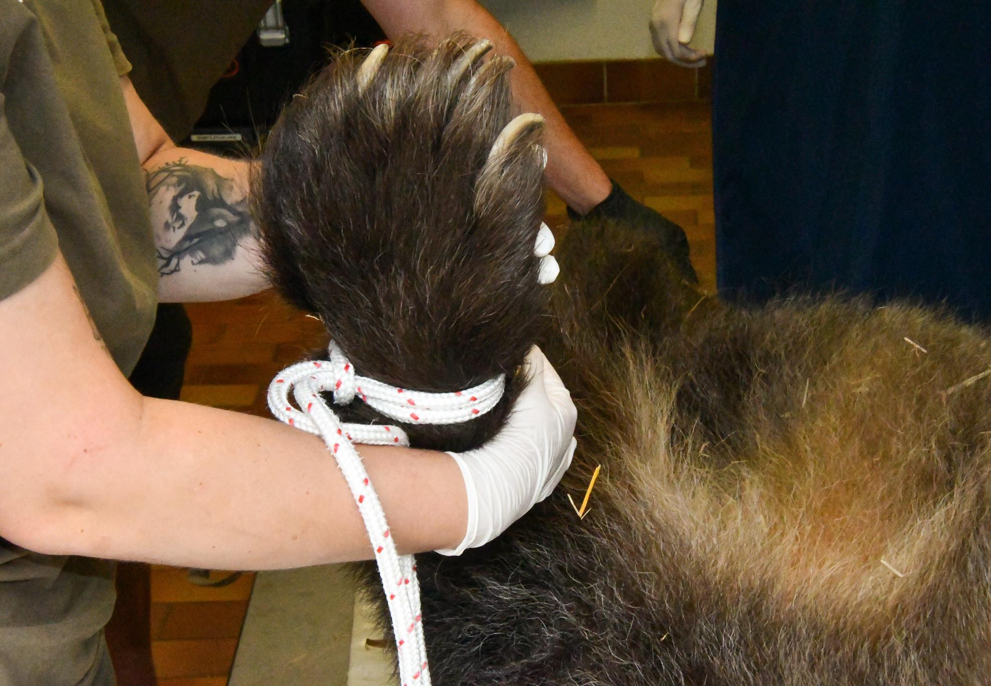 Tatze halten beim Tierarzt