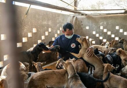 Mitarbeiter mit geretteten Hunden