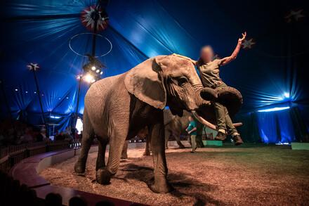 Elephant being used for entertainment in the circus