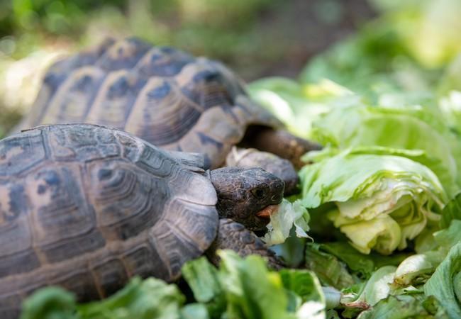 Schildkröten im Eulen- und Greifvogelzentrum, Österreich