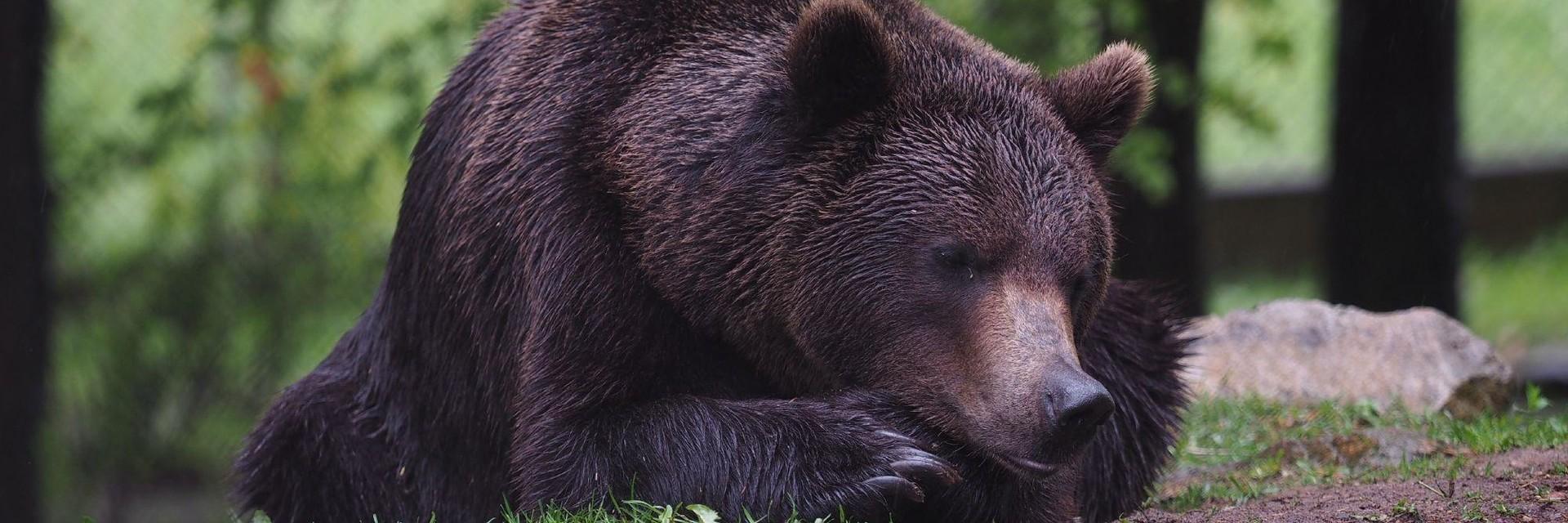 Bear Erich in Arbesbach