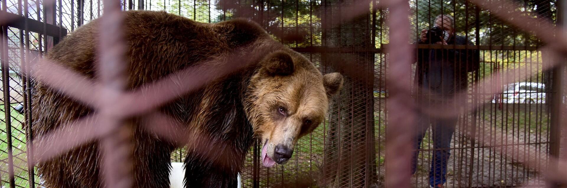Bear Tedi