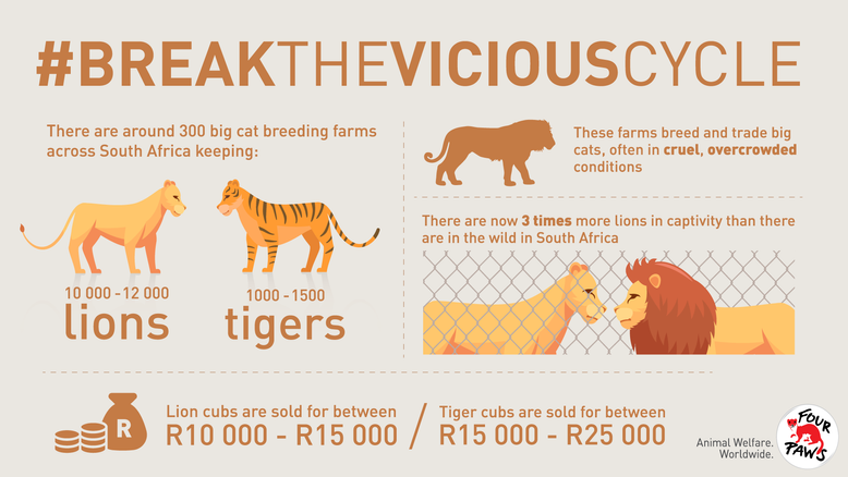 Big cats are being bred for profit