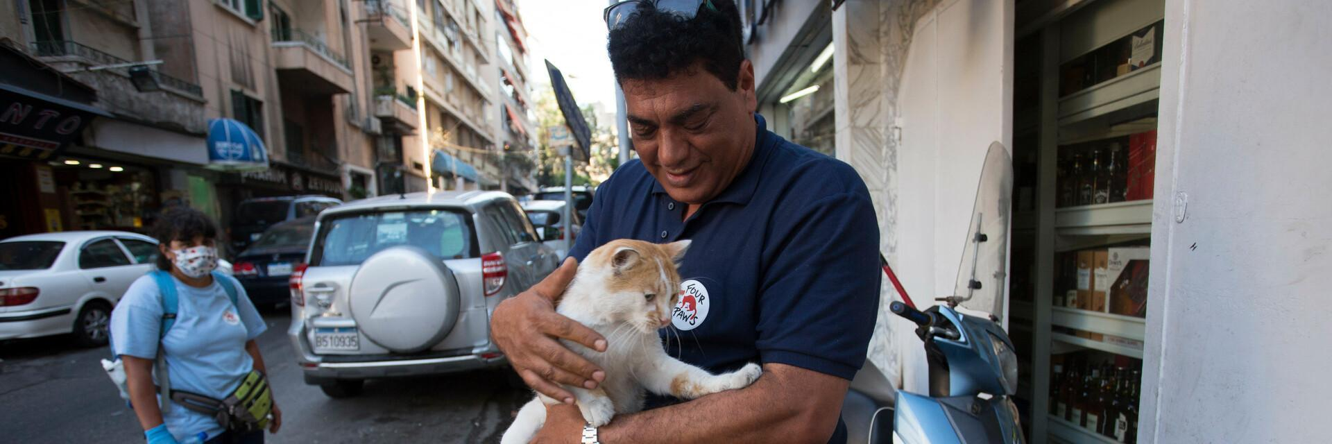 Cat rescued from ruined streets of Beirut