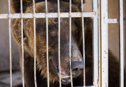 Relocation of the Beirut bears