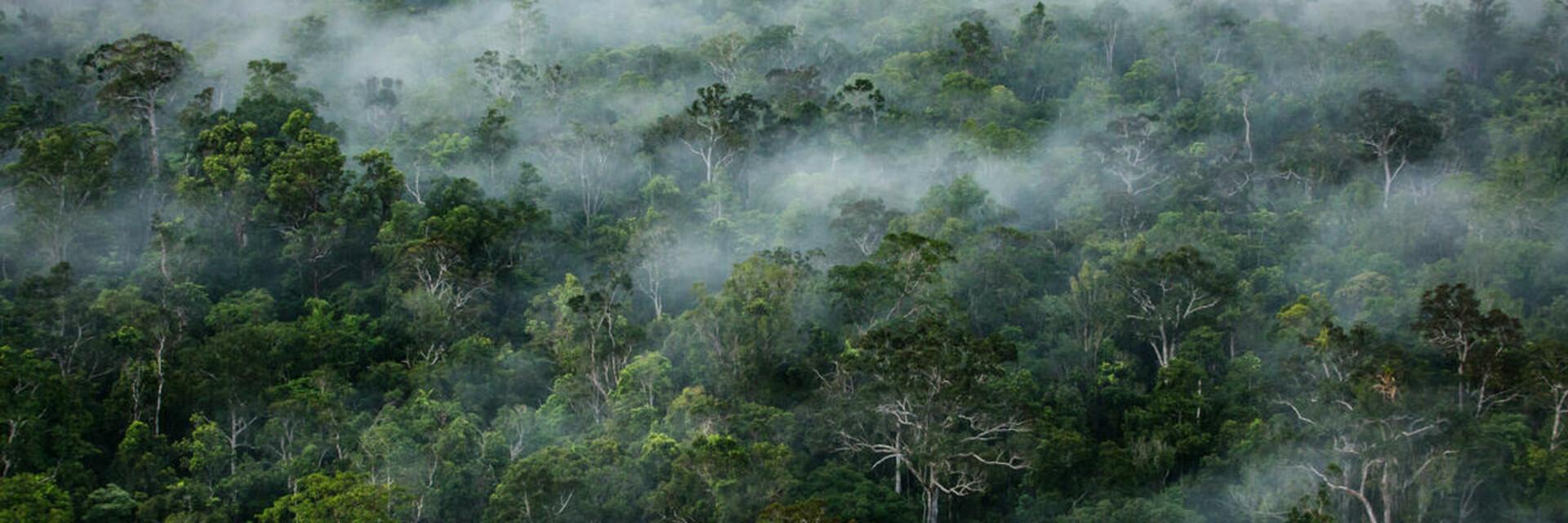 Greenpeace | Ulet Ifansasti