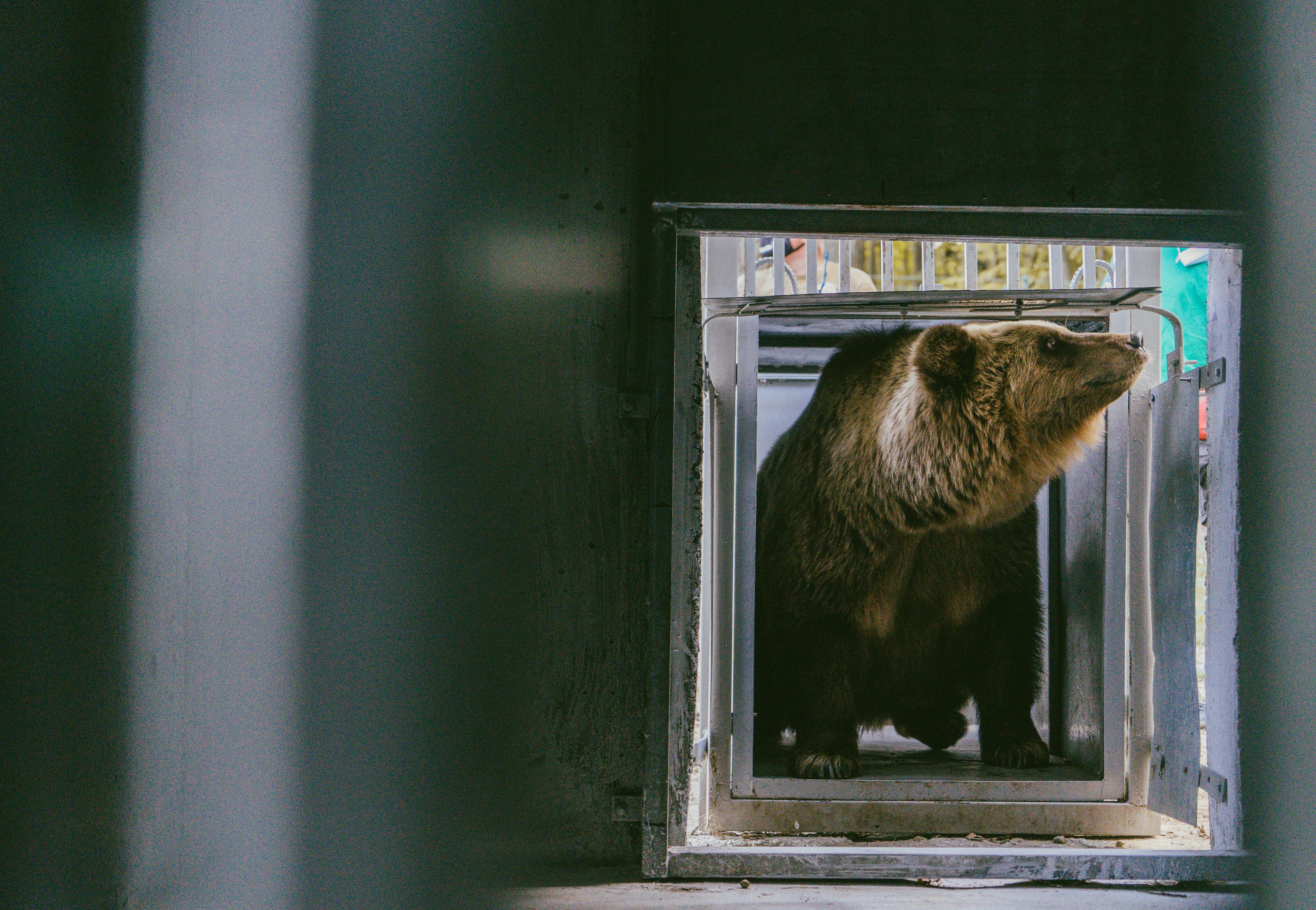 Rescue bears Leo and Melanka