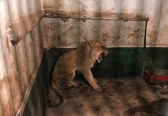 FOUR PAWS visits Razgrad Zoo