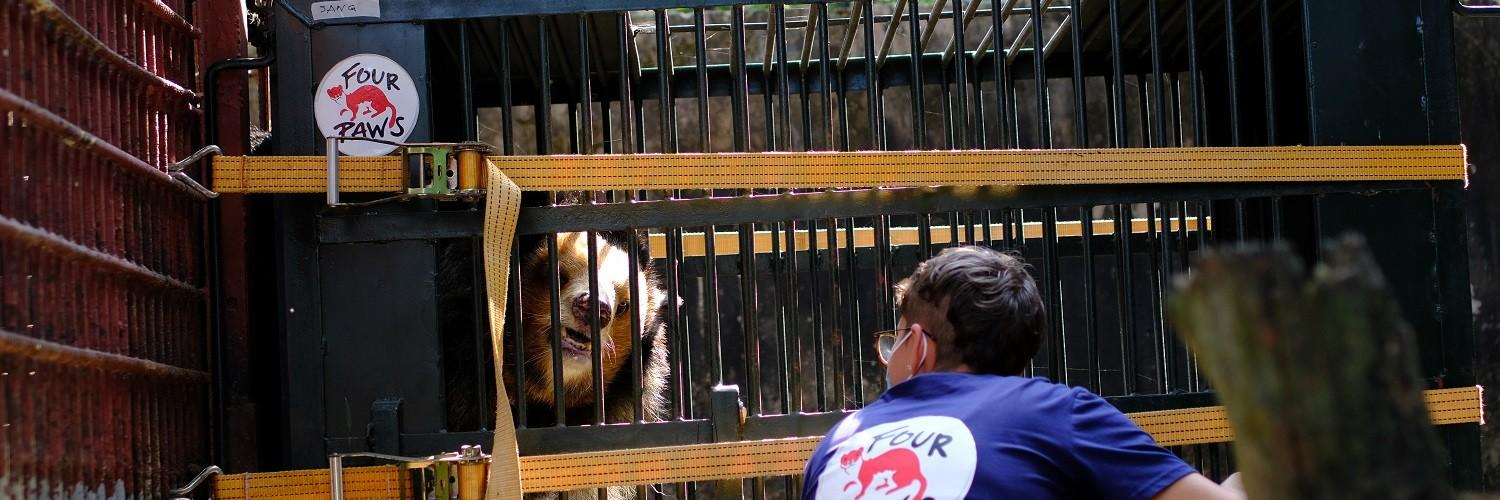 bear Sang being rescued