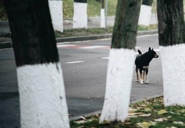 Streuner in Moldawien