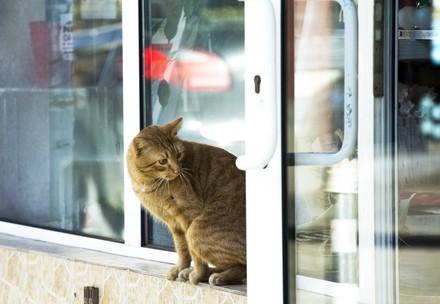 котка до прозореца