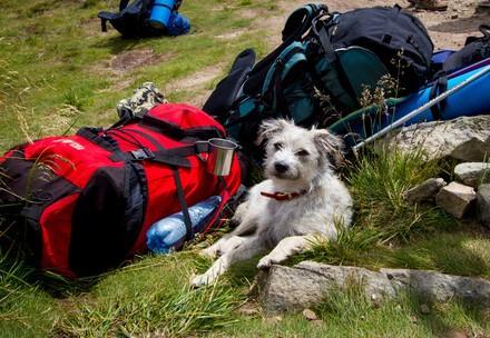 Mit dem Hund auf Urlaub