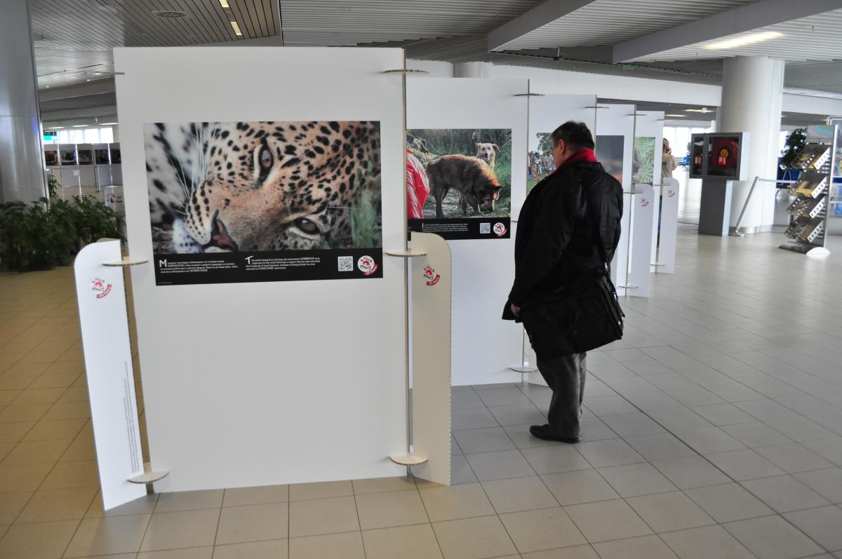 airport-exhibition-man