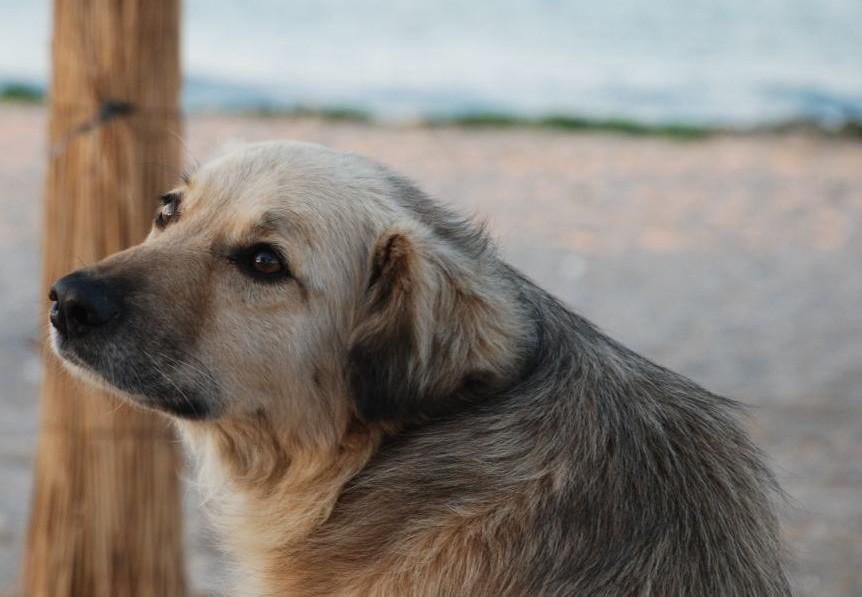 A first-aid kit for your dog