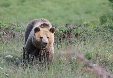 Meimo im Arosa Bärenland