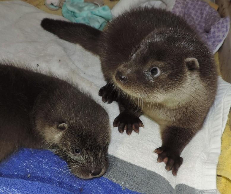 Otter-Mädchen Amy und Bella - herziger geht's nicht!