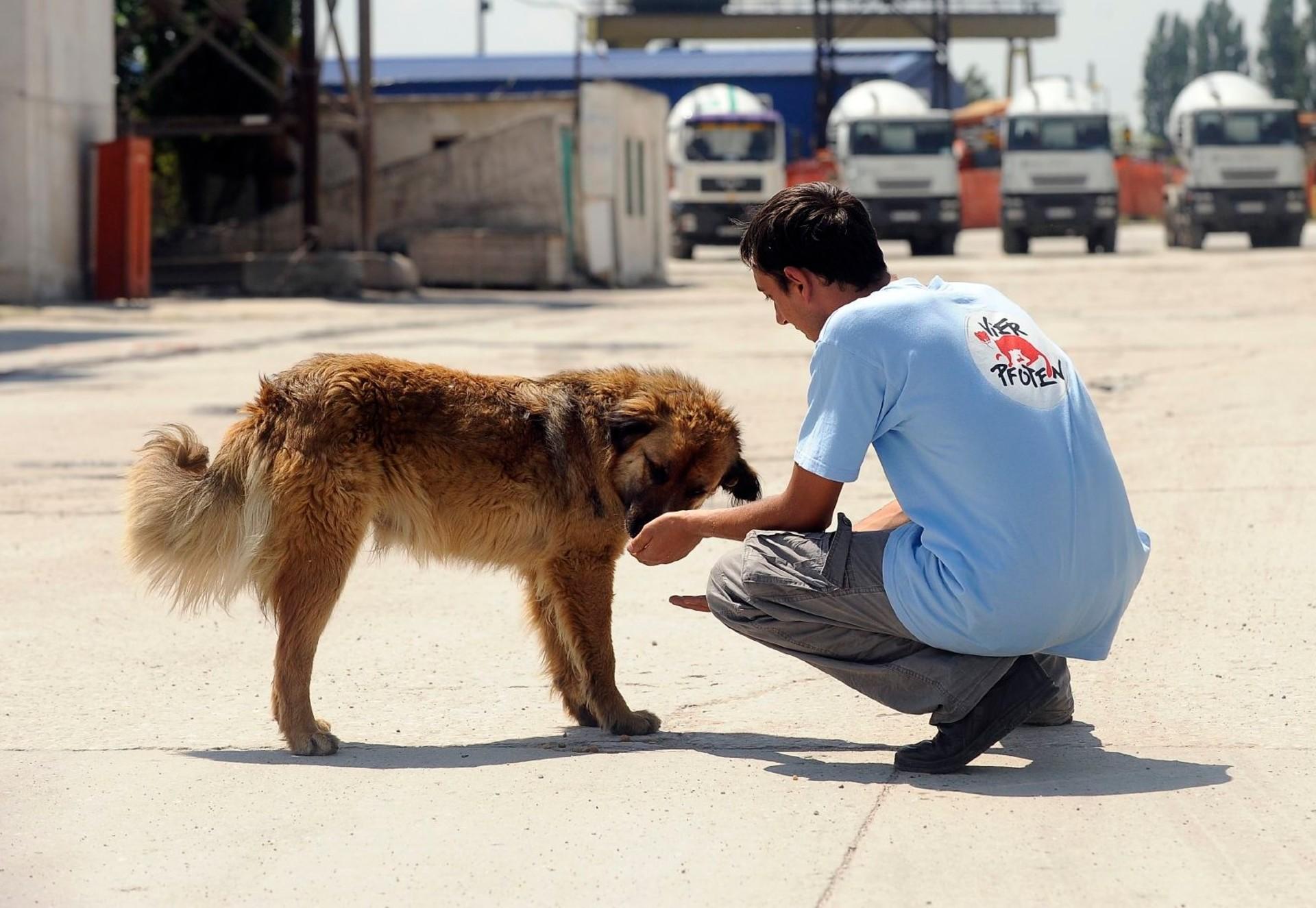 Strays: un projet pour les chiens errants