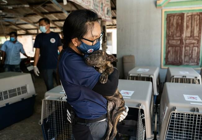 Mitarbeiterin tröstet geretteten Hund