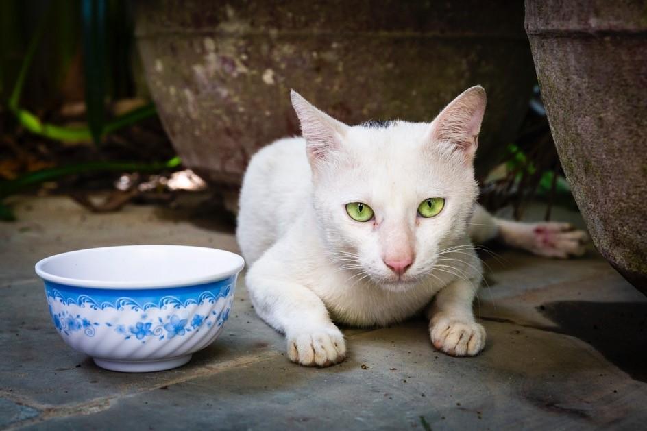 Katze Meow