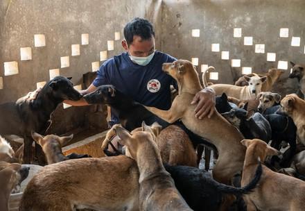 Schließung eines Hundeschlachthofs