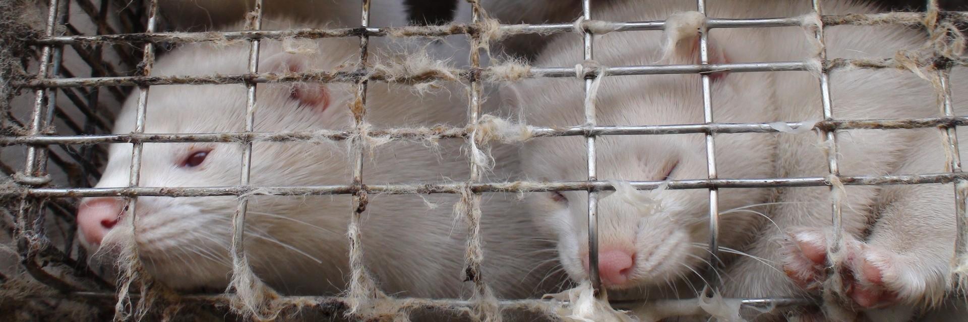 Pandemie & Tierschutz