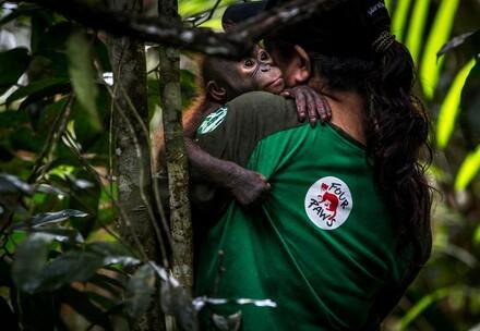 Orangutan mit Pflegerin