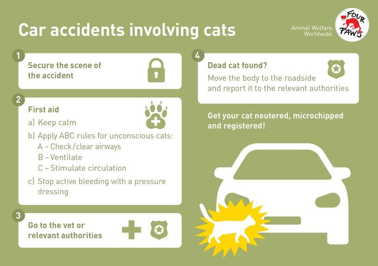 Car accidents involving cats infographic