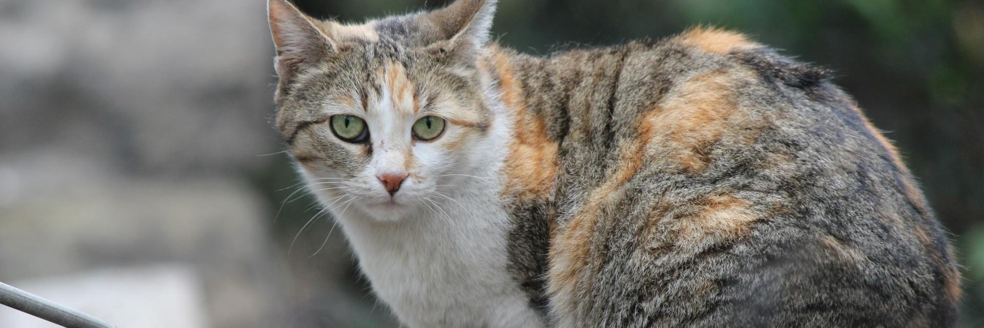 Котка в София