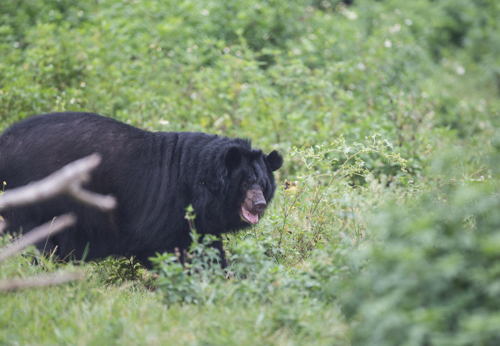 Bears May and Binh Yen