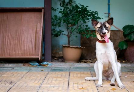 Rescued from the Dog Meat Trade, Dog Neary