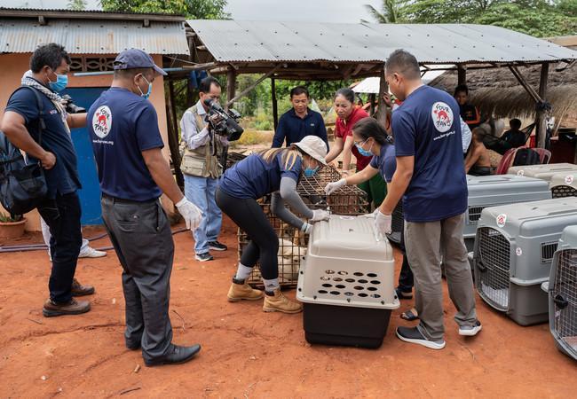 Schließung Hunde-Schlachthaus in Kambodscha