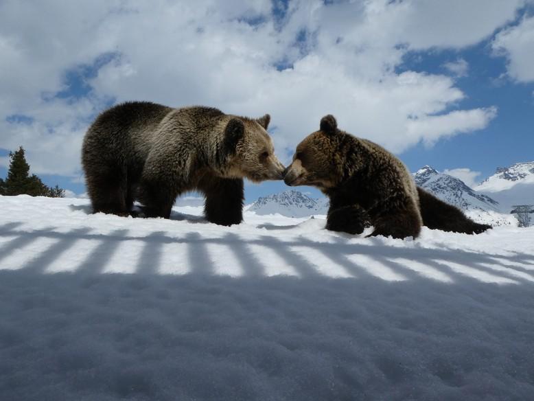 Amelia und Meimo im Schnee